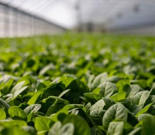 食品農業関連材料